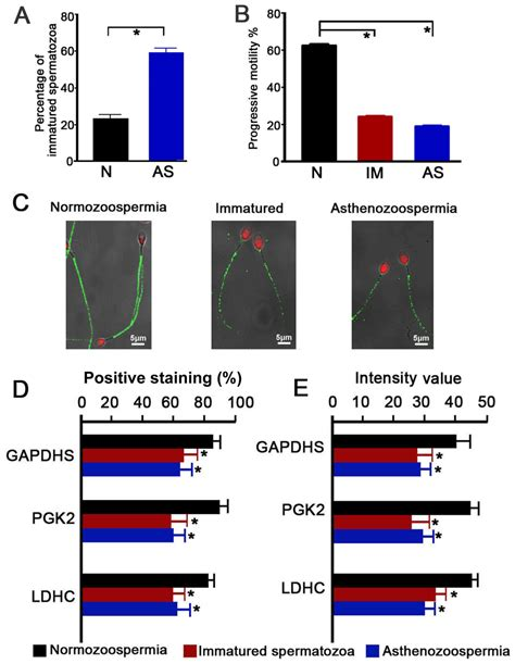 Aberrant expression of sperm‑specific glycolytic enzymes