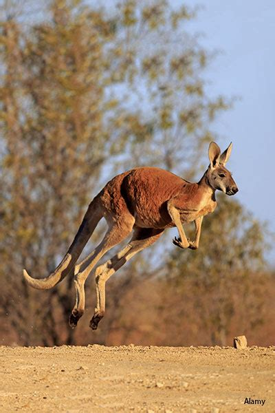 Australia goes wild: 6 amazing critters from Down Under