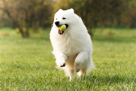 Irresistibly Cute Names for Your White Dog - DogAppy