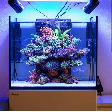This SPS nano reef has some amazing growth! What a tank